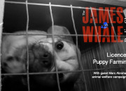 Puppy Farming, James Whale, Marc Abraham, Panorama