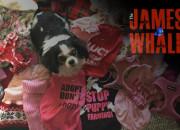james-whale-puppy-farms